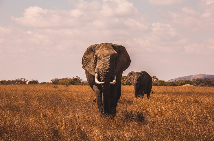 African Safari Big 5