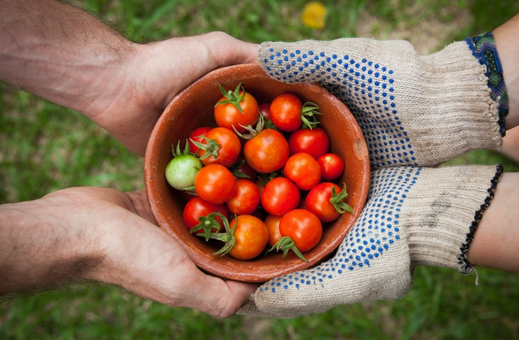 Two sets of hands, one wearing gardening gloves, cradle a bowl of freshly plucked tomatoes.