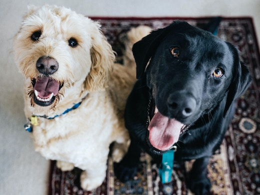 Here Are All The Places You Can Adopt Animals In Brisbane Urban List Brisbane