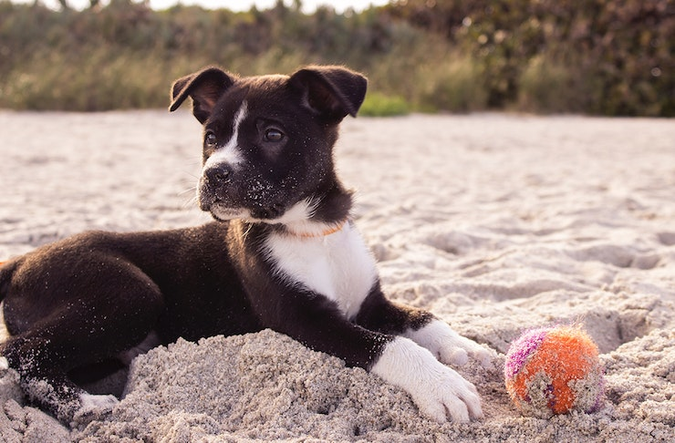 things to do on the gold coast for animal lovers