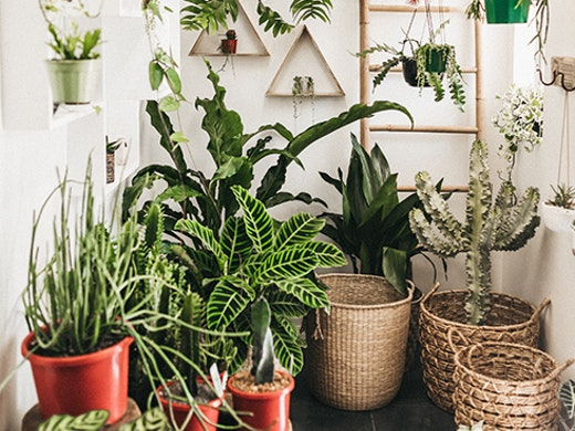GreenFolk Plant Shop Burleigh Heads