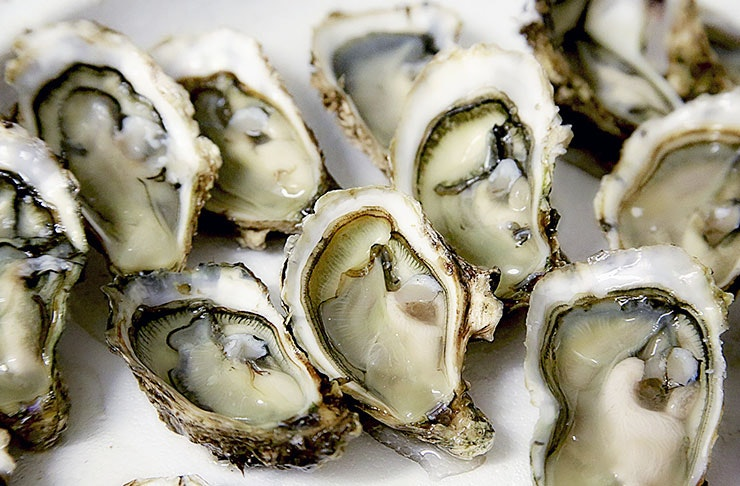Here's How To Get FREE Oysters in Auckland