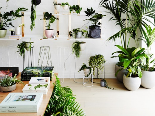 ivy-muse-plant-store
