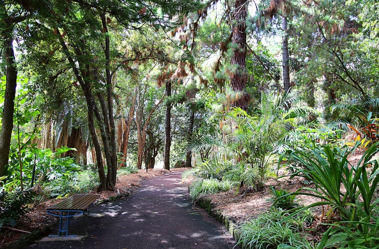 A path in John Oldham Park lined by towering trees.