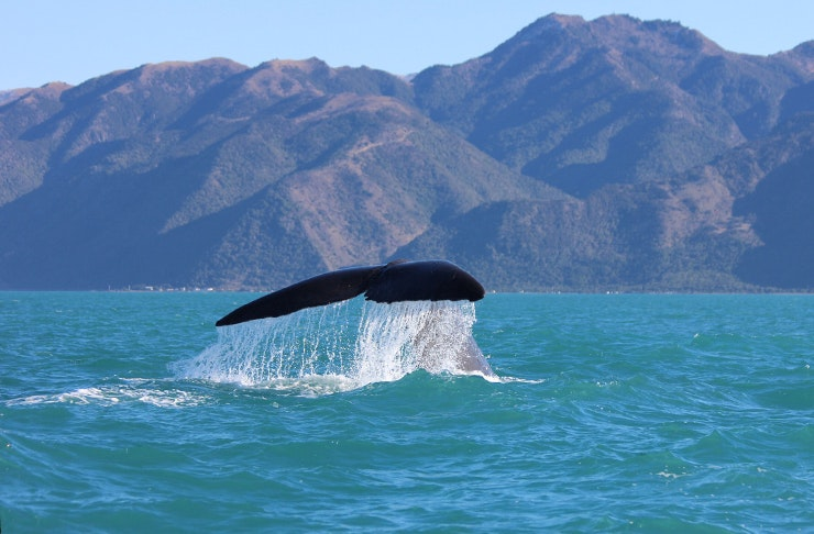 20 Nature Encounters To Have In NZ Before You Die