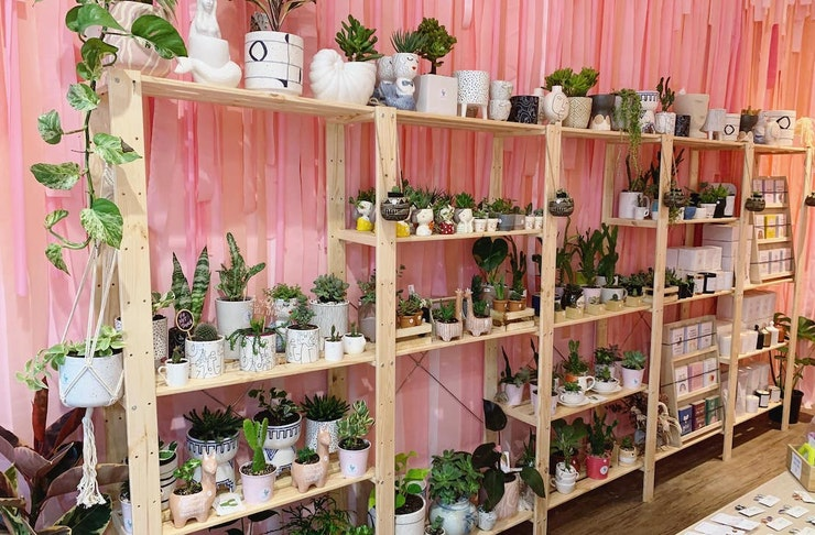 Pink wall at Market Hub with a shelf full of plants and pots