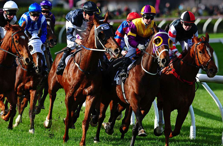 melbourne cup, who to bet on at the Melbourne Cup, melbourne cup auckland, melbourne cup 2015