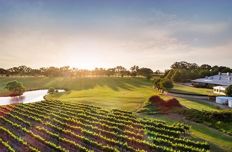 Perth's Best Swan Valley Wineries