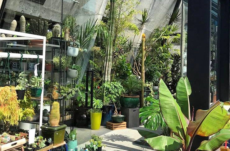 There's A Massive Plant Sale This Weekend!