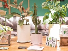 Plants For Friends