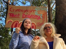 Step Up And Help The Gumbaynggirr Embassy End Excessive Logging In NSW