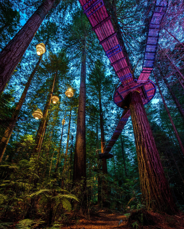 Things-To-Do-Rotorua-Redwoods-Treewalk-Urban-List