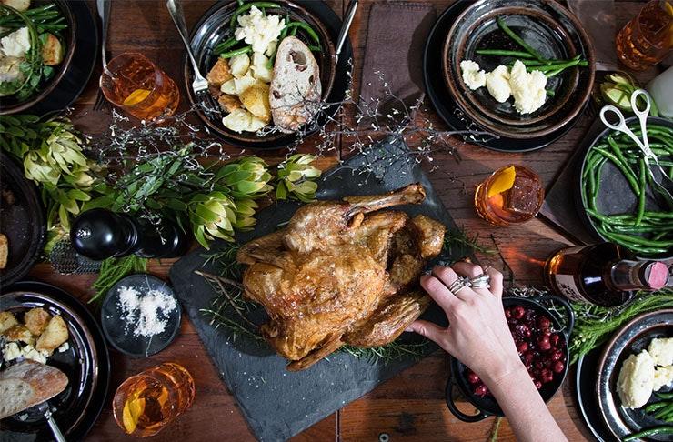 wild-turkey-brisbane