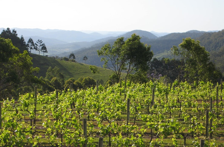 A vineyard overlooking valleys on the Sunshine Coast, Queensland.