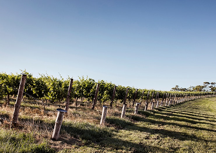 Rows of trees at a wine vineyard.