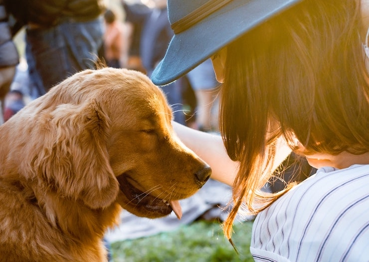 Here's How Your Furry Friend Could Star In A TV Commercial And Score A Ton Of Pet Food
