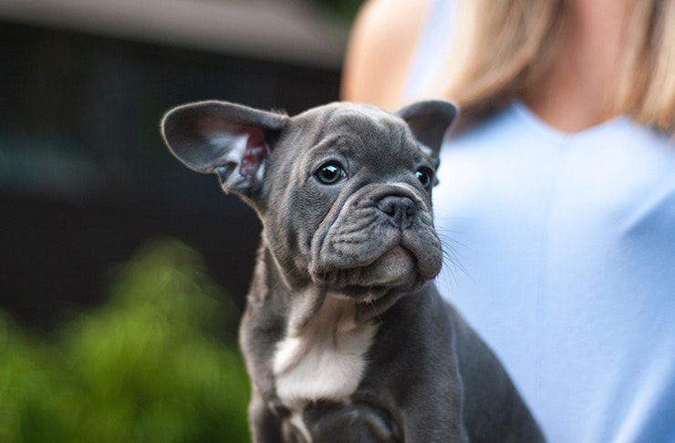 best dog breed star sign, what dog should i get, best dog personalities
