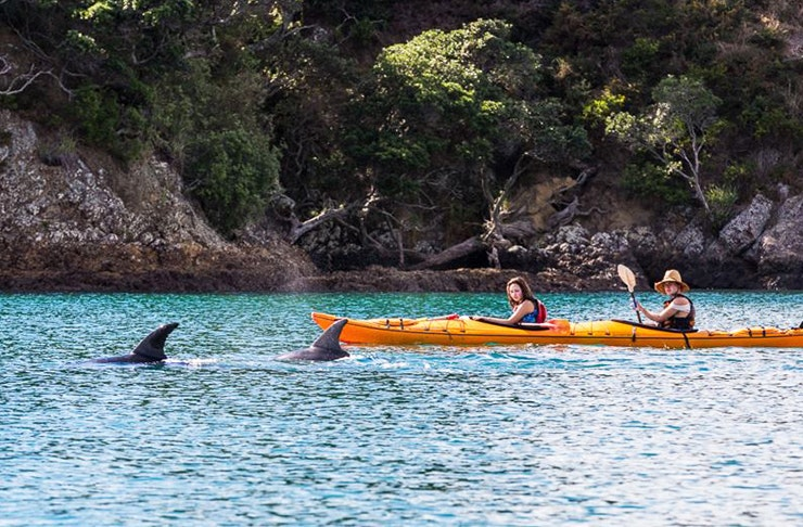A couple in two kayaks watch on as dolphins frolic in the water nearby.