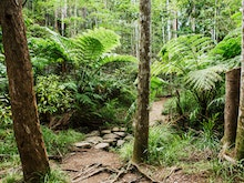Explore The Great Outdoors With The Best Bushwalks On The Sunshine Coast