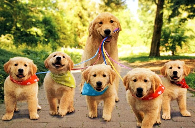 best-dog-friendly-walks-on-the-sunshine-coast