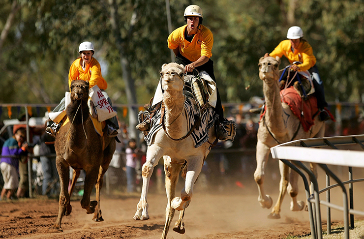 Three jockeys racing camels in the dusty Camel Cup.