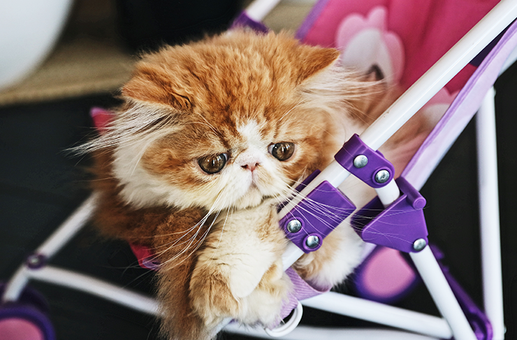 cats-with-jobs