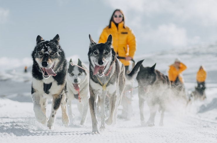 Dog sledding at Cliquot in the snow, Queenstown