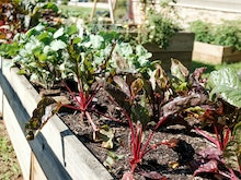 Get Growing At 5 Of The Best Gold Coast Community Gardens You Can Join