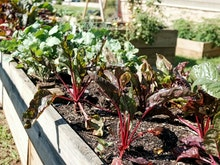 Get Growing At The Best Community Gardens On The Sunshine Coast