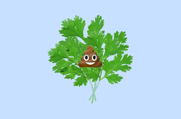 hate coriander