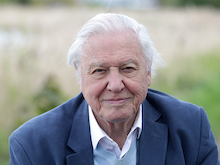 Get In Touch With Nature, Sir David Attenborough Has Been Working On A New Series During Lockdown