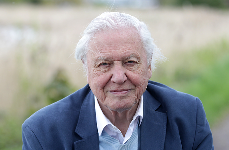 David Attenborough looking into the camera with a calm smile on his face.