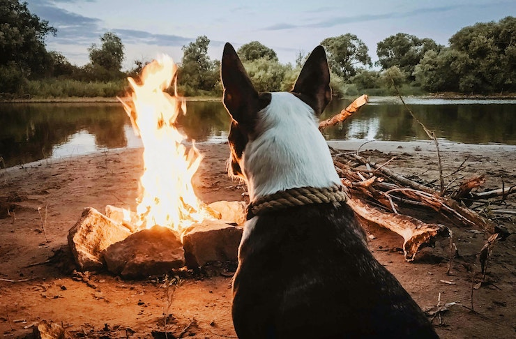 A dog sits watching a bonfire on the shores of a creek.
