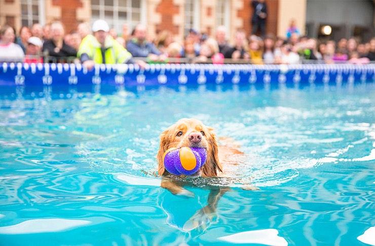 dog-lovers-show-melbourne