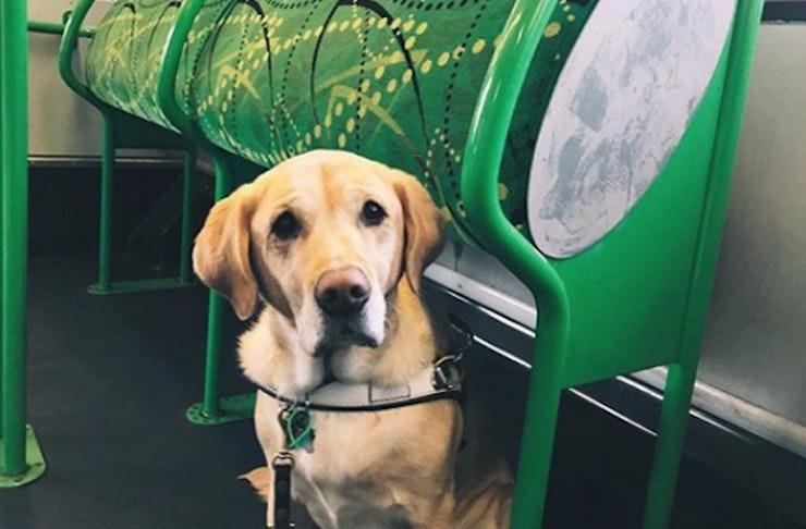 dog-tram-melbourne