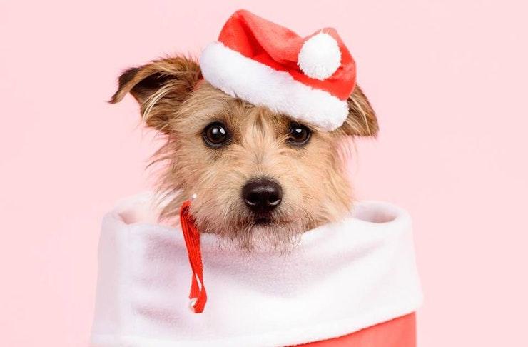 dog_christmas_portraits