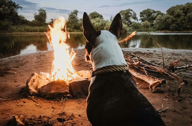 A dog sitting in front of a campfire