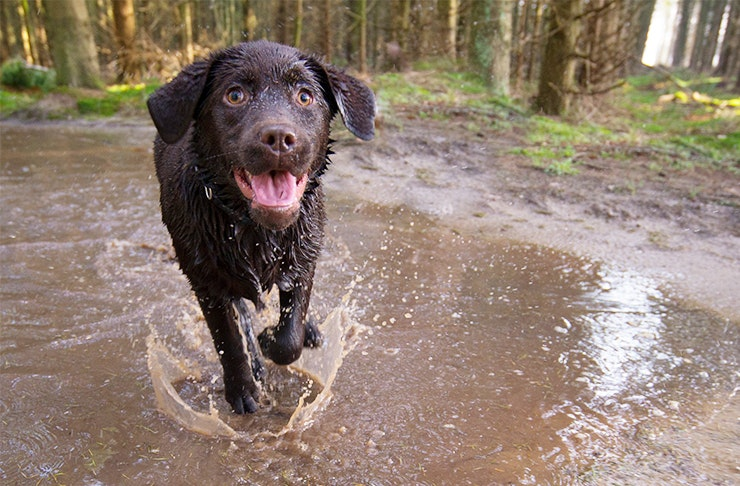 The Swan Valley Is Getting A Mudfest For Dogs