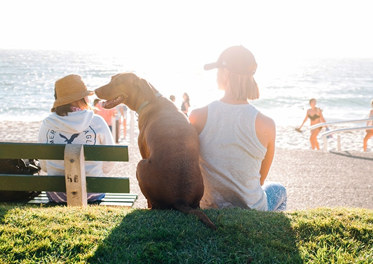 The Best Pet-Friendly Accommodation On The Sunshine Coast