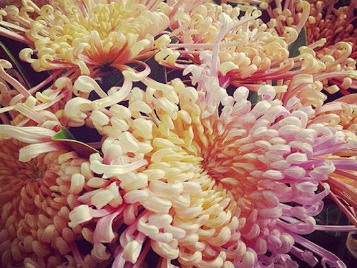 flowers after hours, florists auckland, auckland florists