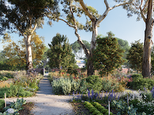 Bliss Out At Heide Museum's Sublime Healing Garden Set To Open This Year