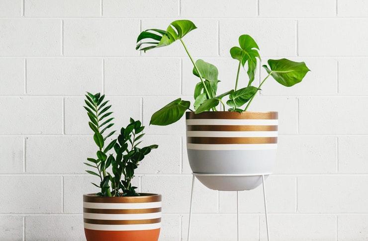 heloaloe-indoor-plant-sale