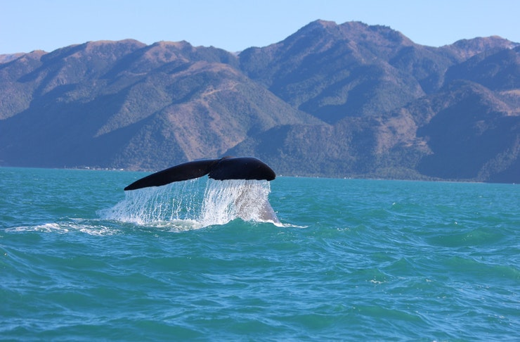 The Best Places To Go Whale Watching In New Zealand