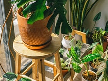 Green Up Your Home At Next Week's Massive Online Plant Sale