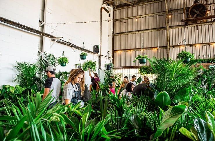 plant-warehouse-sale-brisbane