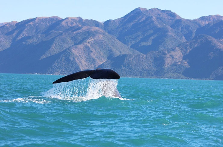 things to do south island new zealand