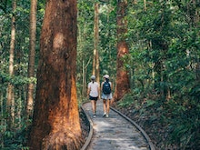 Jump In The Car, Here's How To Have The Ultimate Road Trip To Maleny And Montville