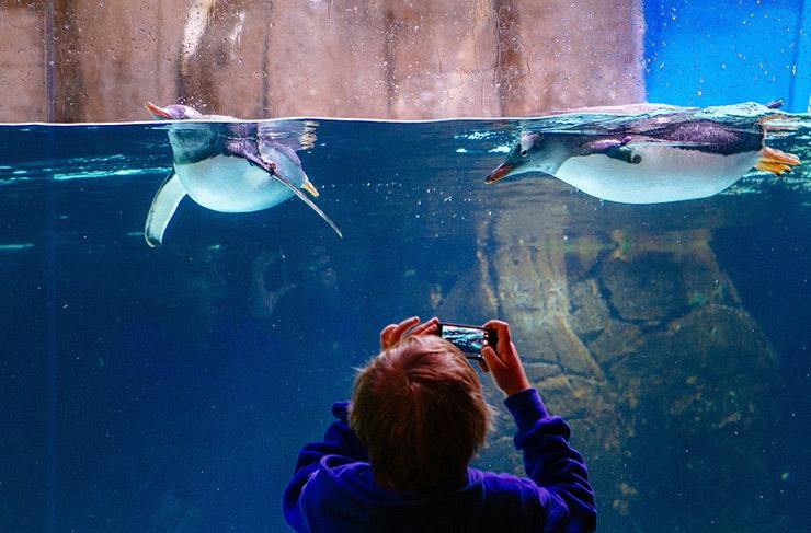 things-to-do-melbourne-aquarium