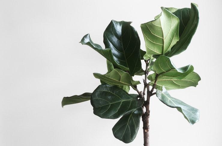 melbourne-plant-sale-pop-up