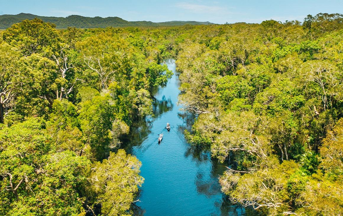 A river runs through watery bushland